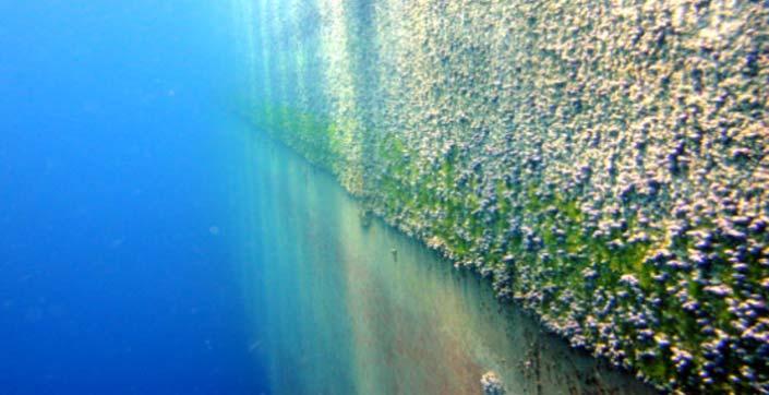 Curățarea subacvatică a carenei